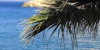 nature - priroda palma