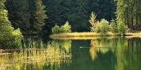 nature - priroda vrbovske pleso